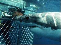 Winamax Poker : approchez les requins blancs de Cap Town