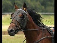 Winamax Poker : devenez copropriétaire d'un cheval de course