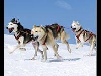Winamax : 50 000 Euro, le Québec et les chiens de traîneau ?